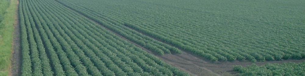 Landbouw gewas