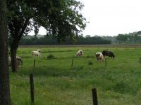 Landelijk gebied rond Ohé en Laak